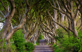 Dark Hedges,северная ирландия,бук,Bregagh Road,аллея,england,northern ireland