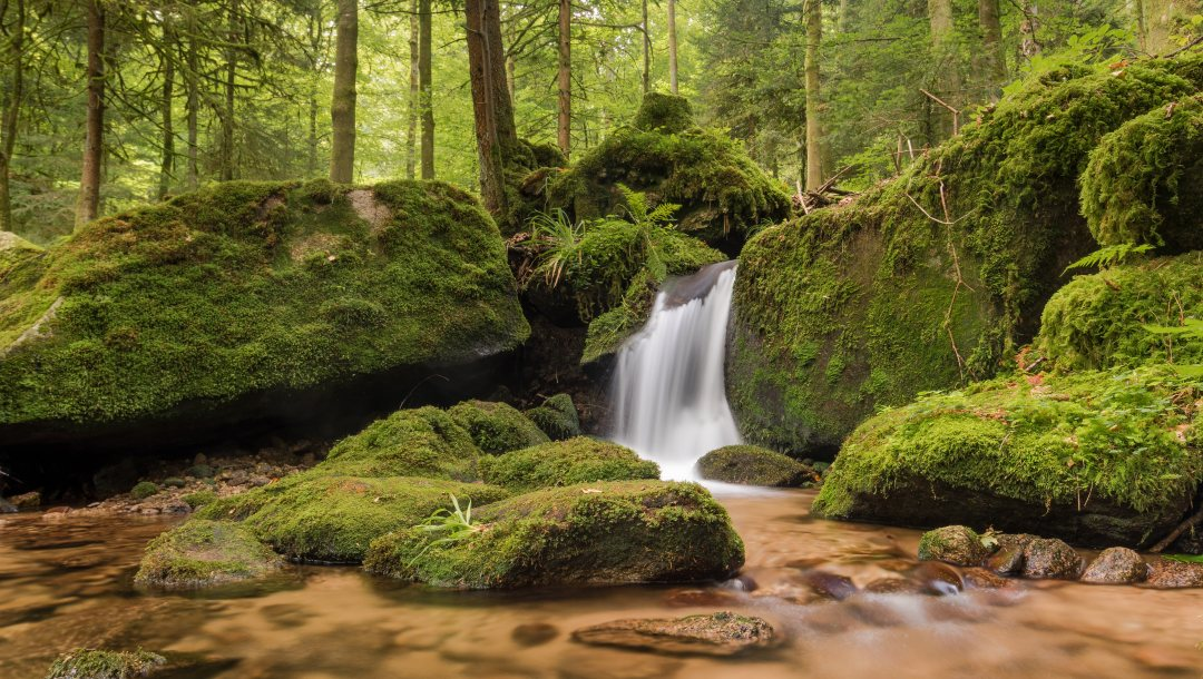 black forest,речка,водопад,Germany,Gertelbach Falls,баден-вюртемберг,германия,шварцвальд,мох
