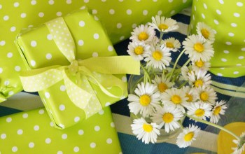 White,цветы,Bouquet,подарки,chamomile,gifts,petals
