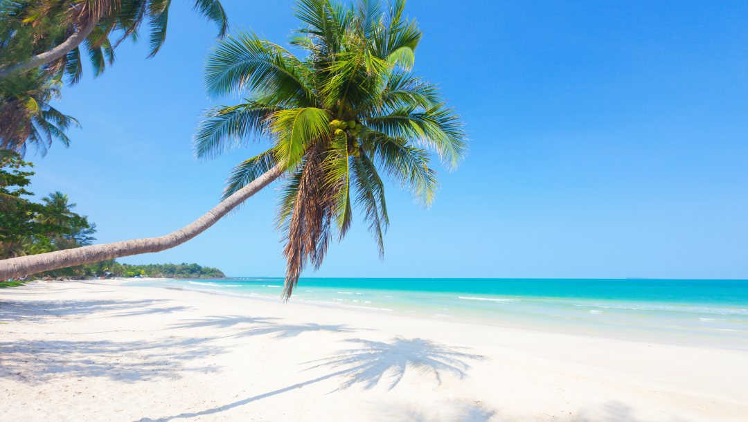 palms,paradise,beach,sand,summer,island,tropical