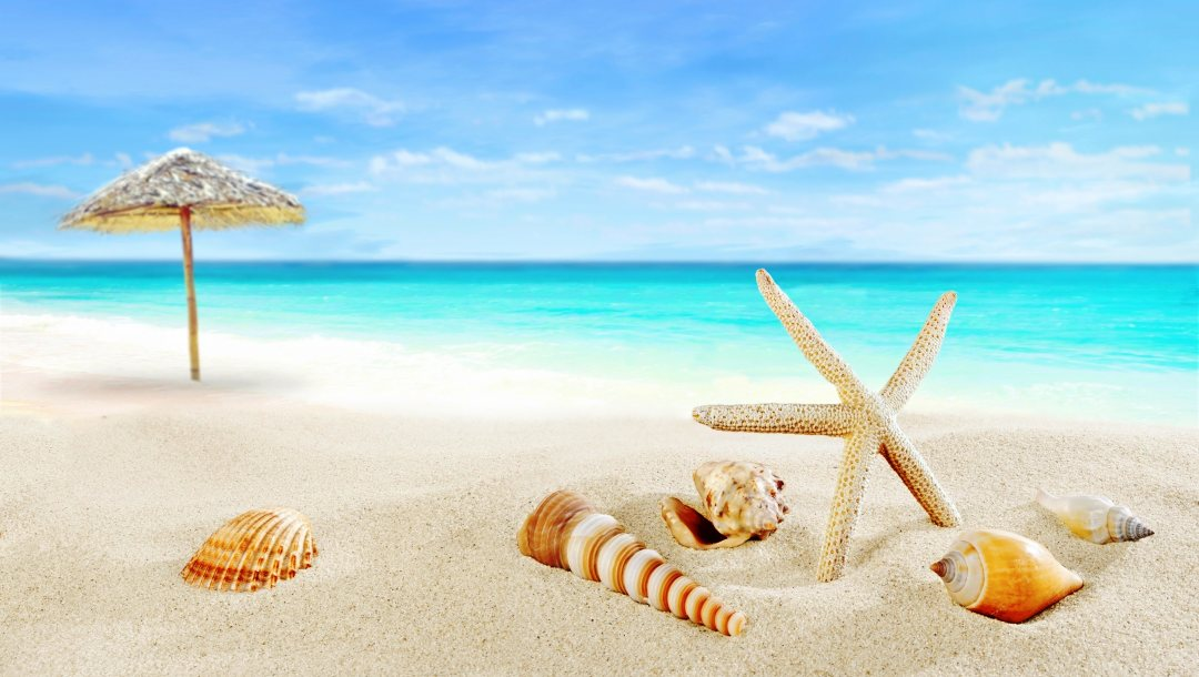 Seashells,starfish,summer,paradise,blue,ракушки,beach,sand,shore