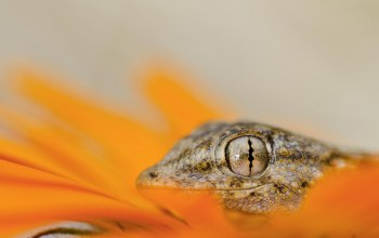 reptile,eyes,lizard,head
