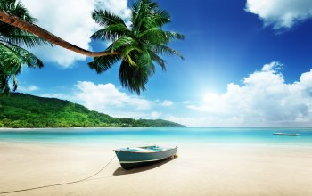 beach,island,paradise,summer,tropical,sand,palms