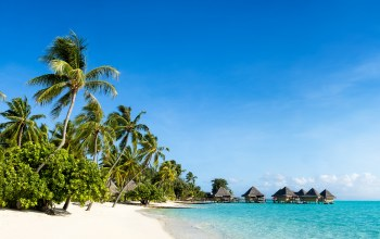 sand,beach,paradise,island,summer,palms,tropical