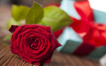 Valentine`s day,gift,rose,Red