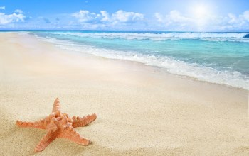 sand,starfish,beach