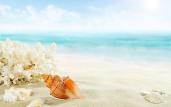 shore,paradise,Seashells,summer,beach,ракушки,starfish,blue,sand