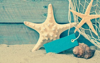 ракушки,starfish,Seashells,summer,sand,beach