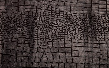 background,crocodile skin,Leather,texture,кожа