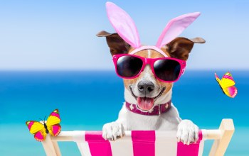 sunglasses,funny,vacation,bunny ears,очки,beach,Собака,happy