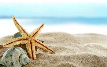 starfish,summer,blue,Seashells,paradise,beach,ракушки,sand,shore
