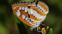 animals,Butterfly