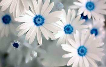 flower,blue,beautiful,and,White