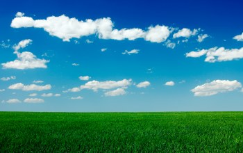 clear,blue,field,grass,sky