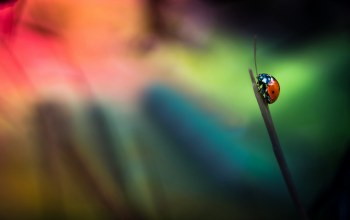 background,ladybug,grass