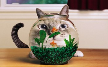 funny,Face,cat,Aquarium,distortion