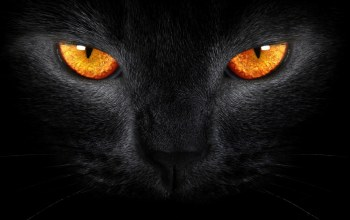 cat,eyes,orange,with