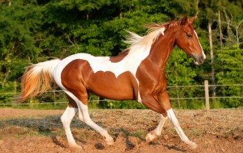 beautiful,horse