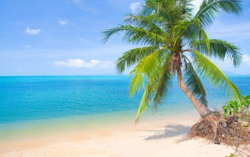 palms,island,summer,paradise,sand,tropical,beach