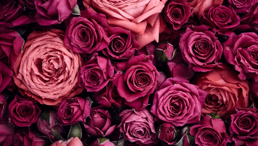 beautiful,roses,background,цветы