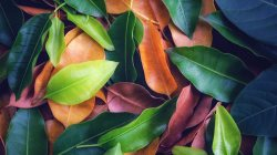 colorful,leaves,background,texture
