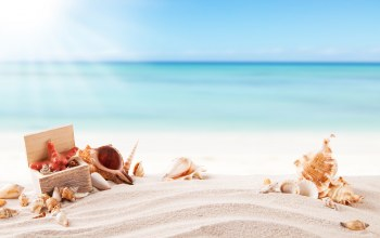 beach,sand,ракушки,лето,Seashells,starfish,summer,каникулы,vacation