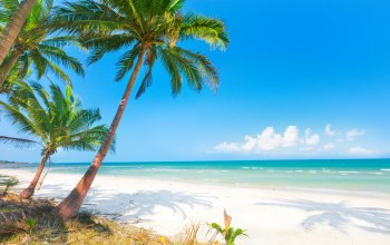 summer,palms,sand,tropical,paradise,island,beach