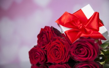 gift,roses,Red,Valentine`s day,красные розы
