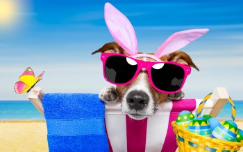 funny,eggs,vacation,Easter,Собака,happy,очки,sunglasses,beach,bunny ears