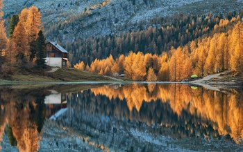 trees,forest,autumn,cabin