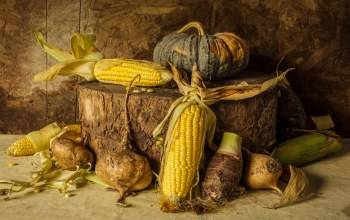 harvest,Corn,кукуруза,овощи,vegetables,still life,натюрморт,pumpkin,тыква,урожай,autumn