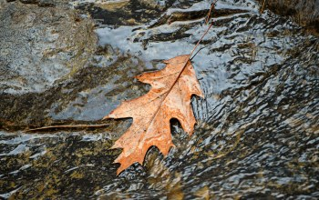 Вода,autumn,leaf,water,осень,поток,fall,flow,листик