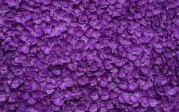 фон,Purple,petals,фиолетовые,lepestki,Floral,background,цветы