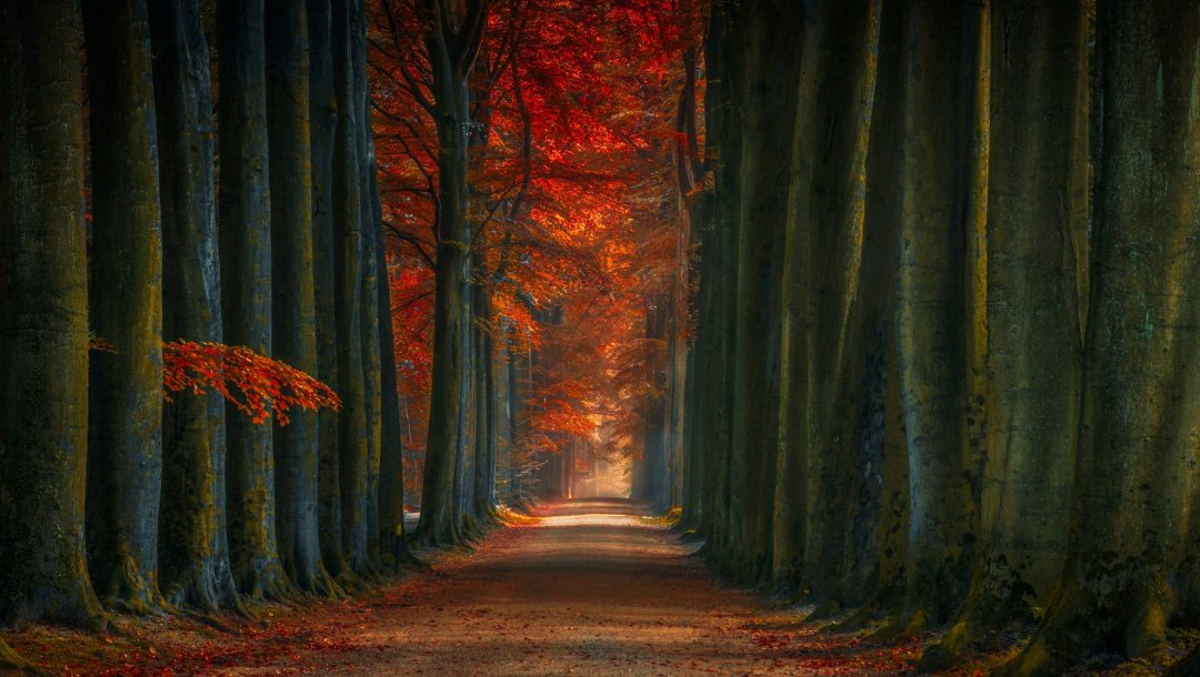 leaves,натуре,autumn,trees,trunks,forest,Road