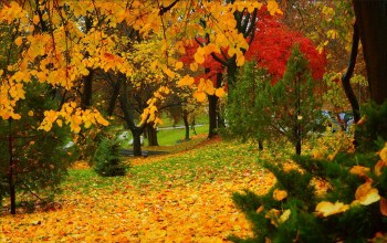 листва,деревья,autumn,colors,park,fall,trees,листопад,park,осень,leaves