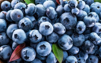 черника,ягодьі,фреш,голубика,Blueberry,berries