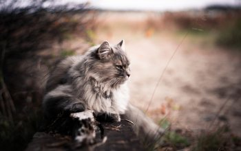 bokeh,animals,блур,Cats