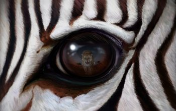 wallpaper,арт,zebra,reflection, рендеринг,Predator,леопард,eye