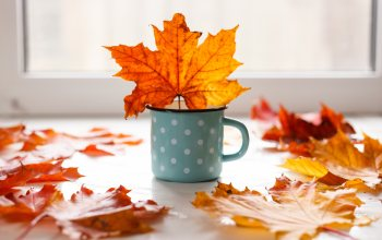 кружка,клен,листья,leaves,wood,фон,maple,mug,colorful,осен,autumn,yellow
