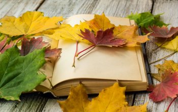 wood,осен,book,maple,leaves,colorful,клен,листья,autumn,книга,фон