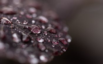 мacro,dew,wet,wallpaper,leaf,натуре,drops