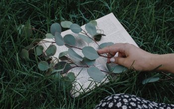wallpaper,grass,мacro,mood,branch,book,hand,lawn