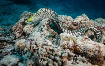 eel,reef,colors