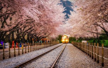 sakura,landscape,train,railway