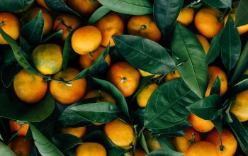 fruits,Oranges,leaves,food,citrus,Mandarin oranges,mandarin