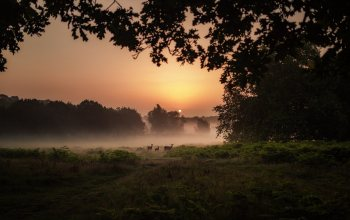 deer,Sunset,landscapes,tall green grass,натуре,dusk,trees,animals,bushes,fog,field,miscellaneous,Plants,meadow
