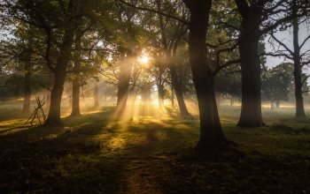 fog,trees,greenery, sun,натуре,dawn,landscapes,sunbeams,forest