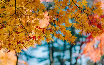 осен,maple,colorful,осенние,листья,autumn,клен,leaves