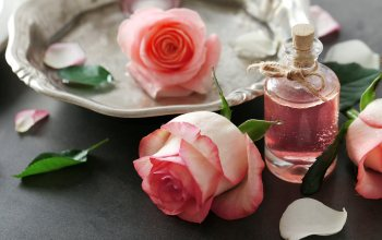 розовые розы,духи,oil,petals,lepestki,rose,Spa,pink