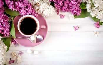 flowers,цветы,siren,wood,lilac,coffee cup,чашка кофе
